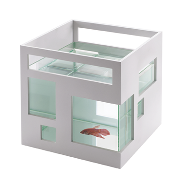 Aquarium design fish