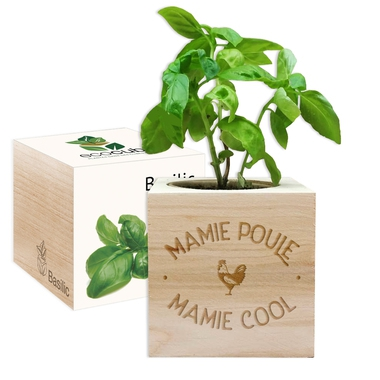 EcoCube Mamie Poule Mamie Cool